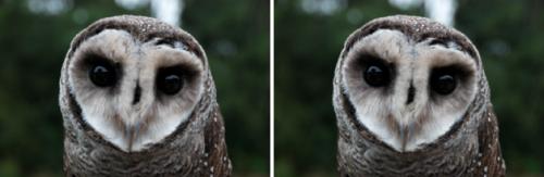 דחיסה גבוהה יותר של תמונות בוורדפרס 4.5